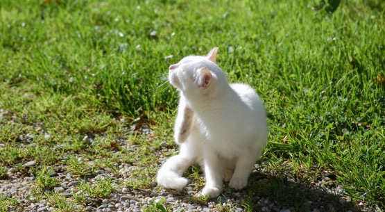 White Cat scratching neck